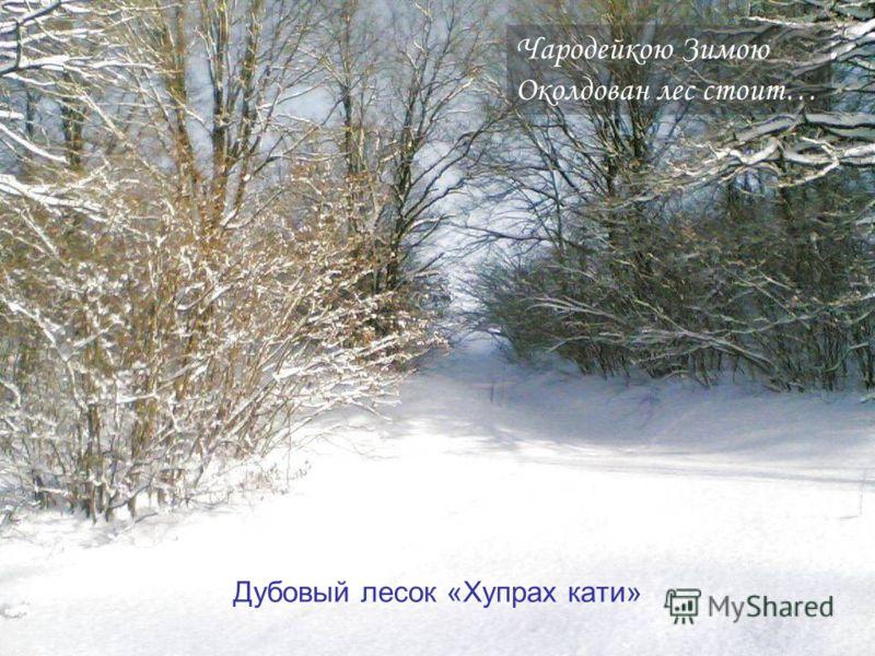Чародейкою Зимою Околдован лес стоит… Дубовый лесок «Хупрах кати»
