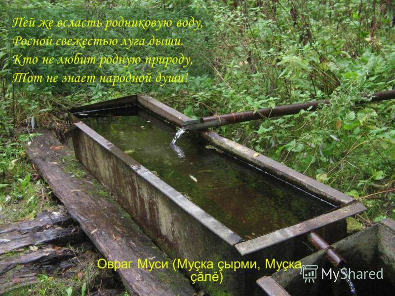 Пей же всласть родниковую воду, Росной свежестью луга дыши. Кто не любит родную природу, Тот не знает народной души! Овраг Муси (Муçка çырми, Муçка çăлĕ)