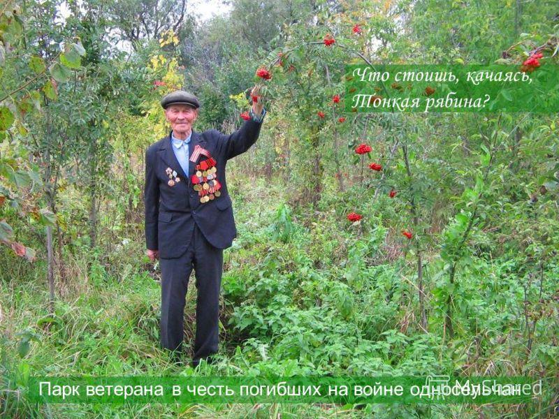 Что стоишь, качаясь, Тонкая рябина? Парк ветерана в честь погибших на войне односельчан
