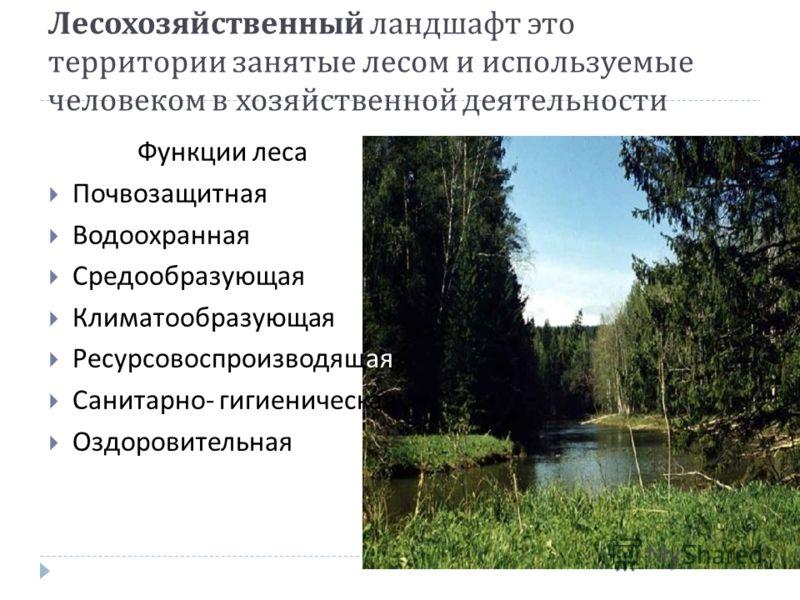 Лесохозяйственный ландшафт это территории занятые лесом и используемые человеком в хозяйственной деятельности Функции леса Почвозащитная Водоохранная Средообразующая Климатообразующая Ресурсовоспроизводящая Санитарно - гигиеническая Оздоровительная