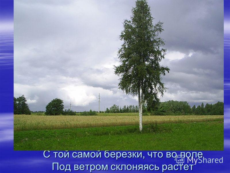 С той самой березки, что во поле Под ветром склоняясь растет