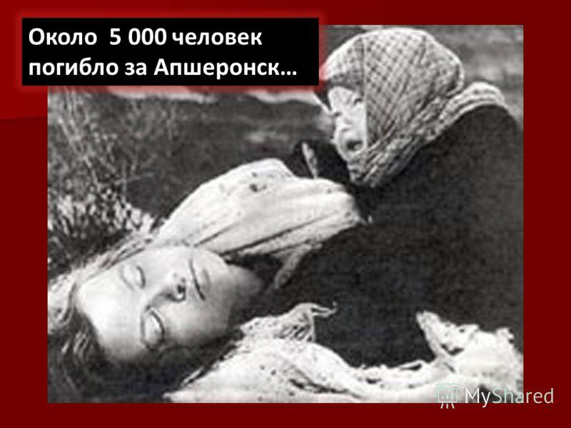 Около 5 000 человек погибло за Апшеронск…