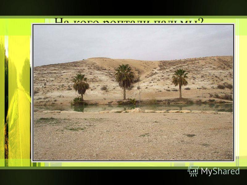 На кого роптали пальмы? на ручей на пустыню на бога
