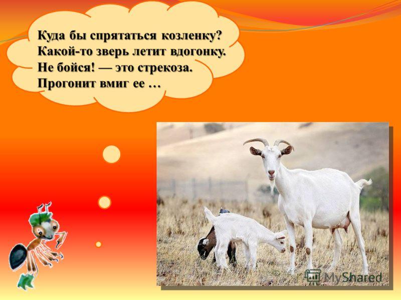 Верблюжонок у ворот Маму жалобно зовет, Не бойся, не заблудится, Придет домой …