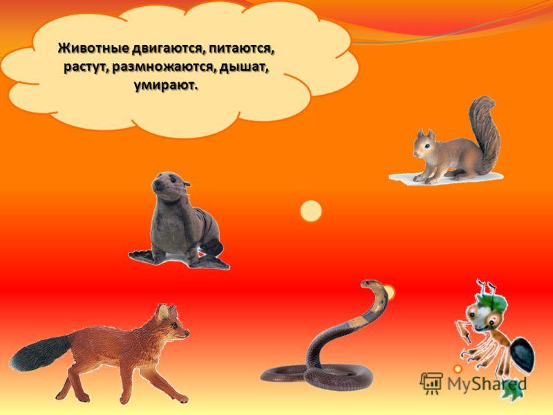 Как живут животные группы животных