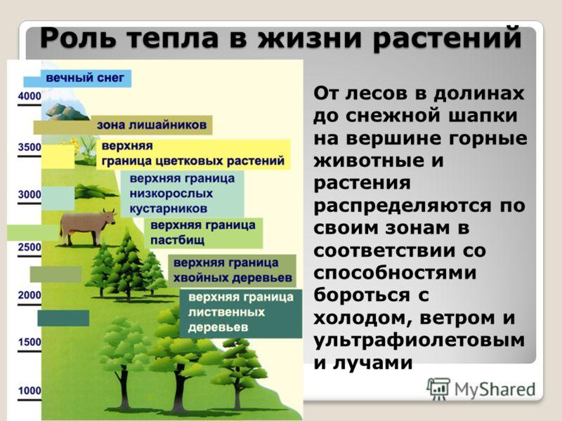 Роль тепла в жизни растений От лесов в долинах до снежной шапки на вершине горные животные и растения распределяются по своим зонам в соответствии со способностями бороться с холодом, ветром и ультрафиолетовым и лучами