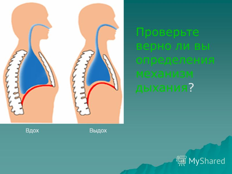ВдохВыдох Проверьте верно ли вы определения механизм дыхания?