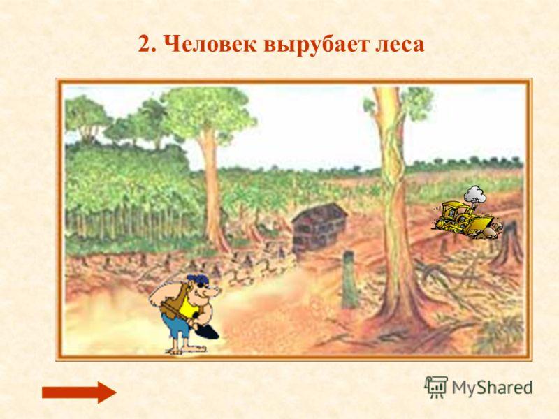 2. Человек вырубает леса