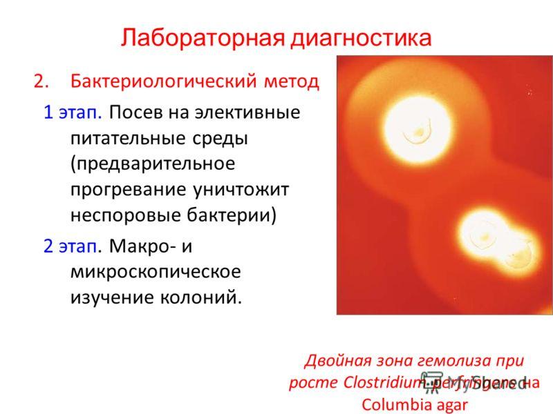 Лабораторная диагностика 2.Бактериологический метод 1 этап. Посев на элективные питательные среды (предварительное прогревание уничтожит неспоровые бактерии) 2 этап. Макро- и микроскопическое изучение колоний. Двойная зона гемолиза при росте Clostrid