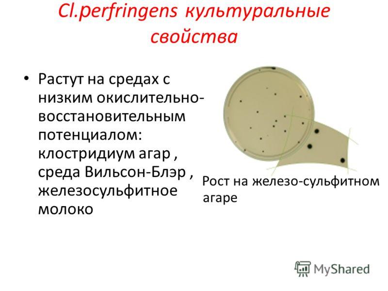 Растут на средах с низким окислительно- восстановительным потенциалом: клостридиум агар, среда Вильсон-Блэр, железосульфитное молоко Рост на железо-сульфитном агаре Cl. р erfringens культуральные свойства