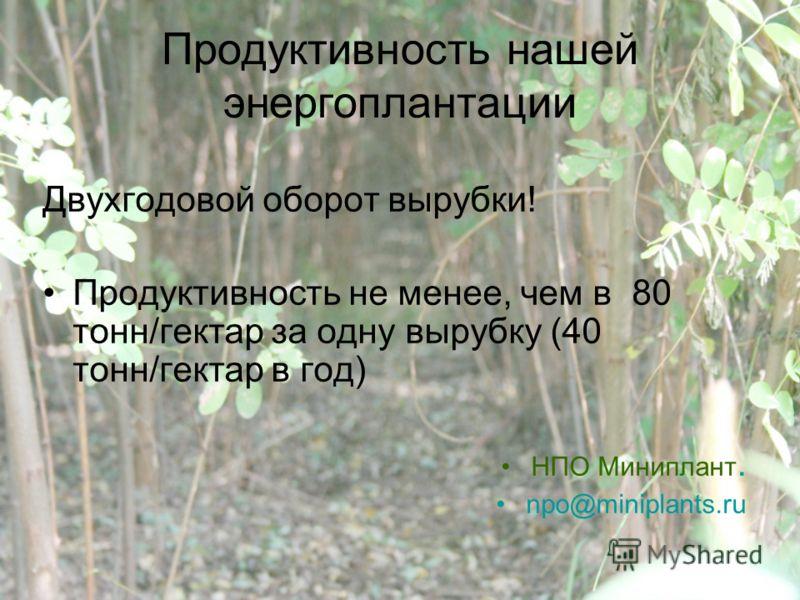 Продуктивность нашей энергоплантации Двухгодовой оборот вырубки! Продуктивность не менее, чем в 80 тонн/гектар за одну вырубку (40 тонн/гектар в год) НПО Миниплант. npo@miniplants.ru