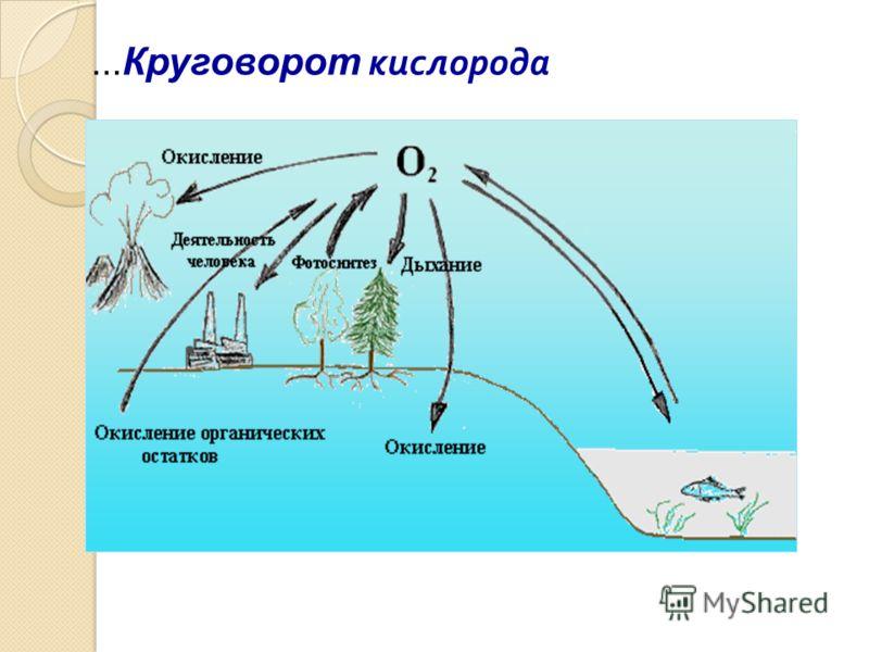 … Круговорот кислорода