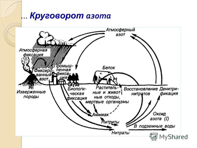 … Круговорот азота