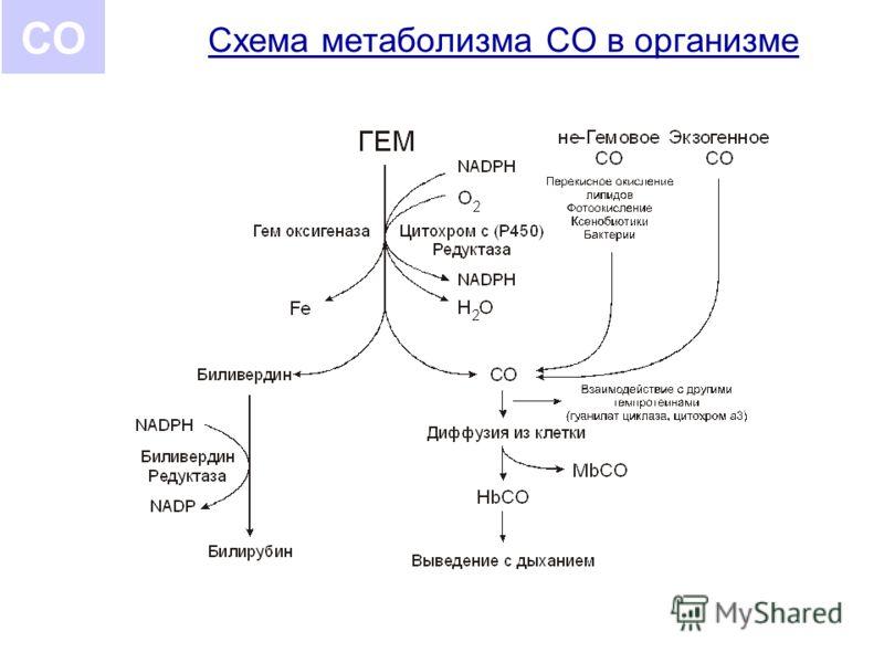 Схема метаболизма СО в организме СО