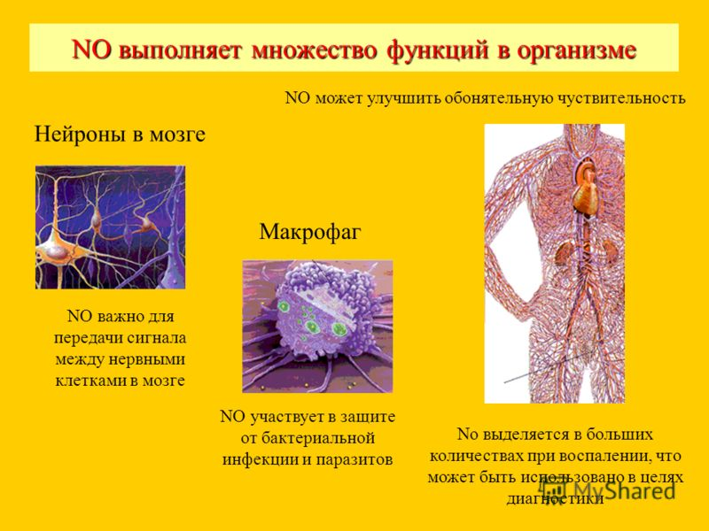 NO выполняет множество функций в организме NO важно для передачи сигнала между нервными клетками в мозге NO участвует в защите от бактериальной инфекции и паразитов Макрофаг Нейроны в мозге No выделяется в больших количествах при воспалении, что може