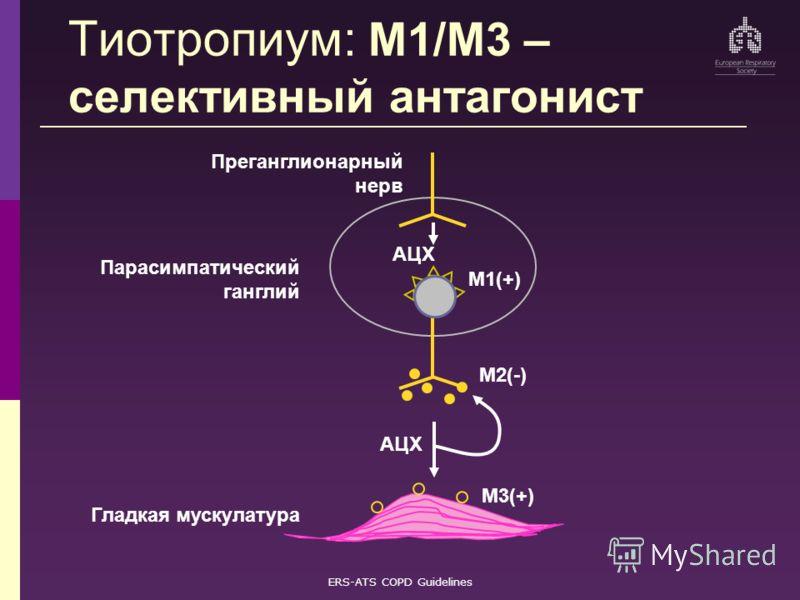 ERS-ATS COPD Guidelines Парасимпатический ганглий АЦХ M1(+) M3(+) Гладкая мускулатура M2(-) Преганглионарный нерв AЦХ Tиотропиум: M1/M3 – селективный антагонист