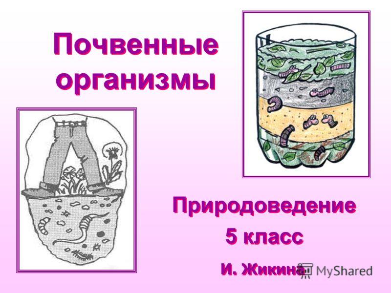 Почвенные организмы Природоведение 5 класс Природоведение 5 класс И. Жикина