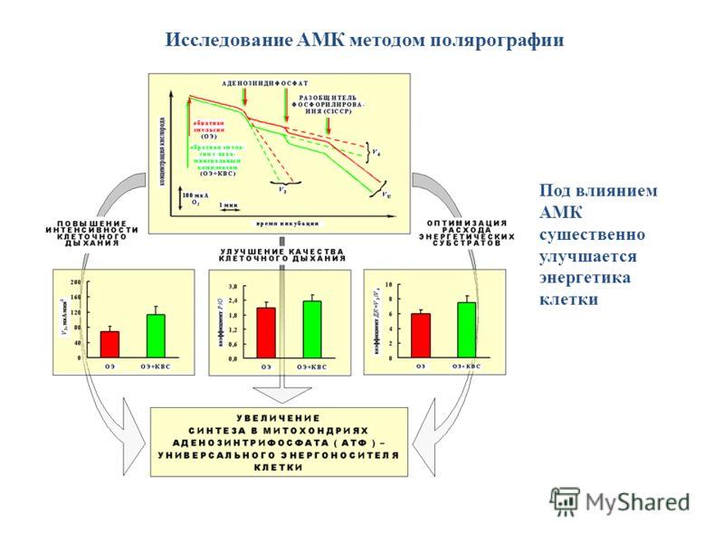 Исследование АМК методом полярографии Под влиянием АМК сушественно улучшается энергетика клетки
