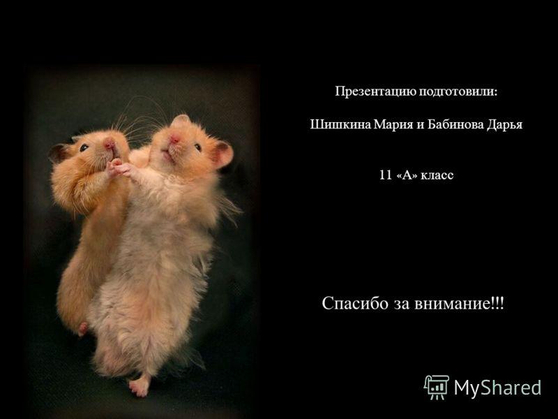 Презентацию подготовили : Шишкина Мария и Бабинова Дарья 11 « А » класс Спасибо за внимание !!!