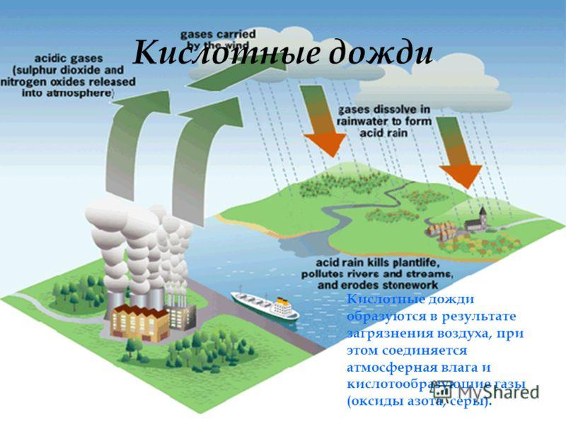 Кислотные дожди Кислотные дожди образуются в результате загрязнения воздуха, при этом соединяется атмосферная влага и кислотообразующие газы (оксиды азота, серы).