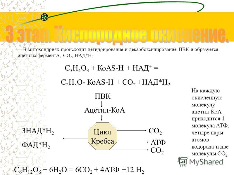 Дальнейшая судьба ПВК зависит от присутствия О 2 в клетке. Если О 2 нет, происходит анаэробное дыхание, причем: а) У дрожжей и растений происходит спиртовое брожение: 1. 2 С 3 Н 4 О 3 = 2 СО 2 + 2 СН 3 СОН (уксусный альдегид) 2. 2 СН 3 СОН + 2 НАД*Н