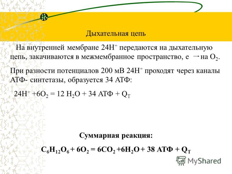 В митохондриях происходит дегидрирование и декарбоксилирование ПВК и образуется ацетилкоферментА, СО 2, НАД*Н 2 С 3 Н 4 О 3 + КоАS-H + НАД + = С 2 Н 3 О- КоАS-H + СО 2 +НАД*Н 2 ПВК Ацетил-КоА Цикл Кребса СО 2 АТФ СО 2 3НАД*Н 2 ФАД*Н 2 На каждую окисл