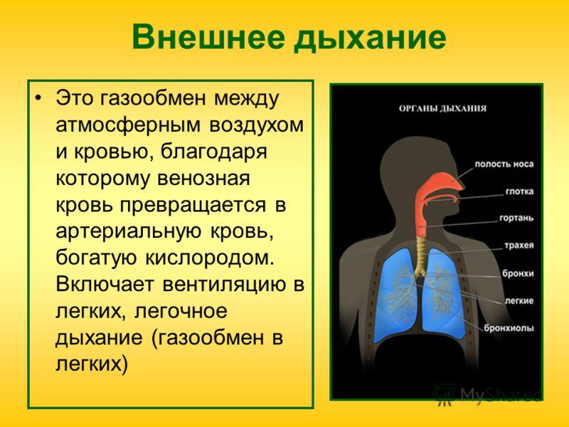 Внешнее дыхание Это газообмен между атмосферным воздухом и кровью, благодаря которому венозная кровь превращается в артериальную кровь, богатую кислородом. Включает вентиляцию в легких, легочное дыхание (газообмен в легких)