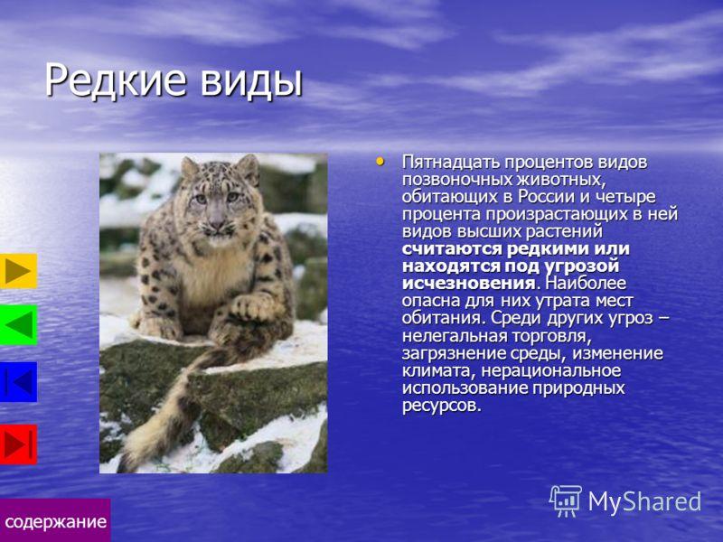 содержание Редкие виды Пятнадцать процентов видов позвоночных животных, обитающих в России и четыре процента произрастающих в ней видов высших растений считаются редкими или находятся под угрозой исчезновения. Наиболее опасна для них утрата мест обит