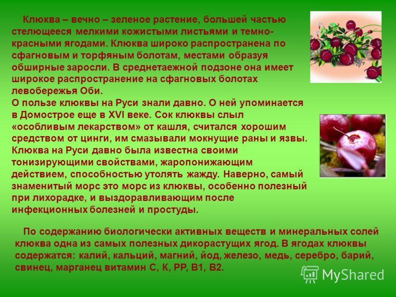 Клюква – вечно – зеленое растение, большей частью стелющееся мелкими кожистыми листьями и темно- красными ягодами. Клюква широко распространена по сфагновым и торфяным болотам, местами образуя обширные заросли. В среднетаежной подзоне она имеет широк