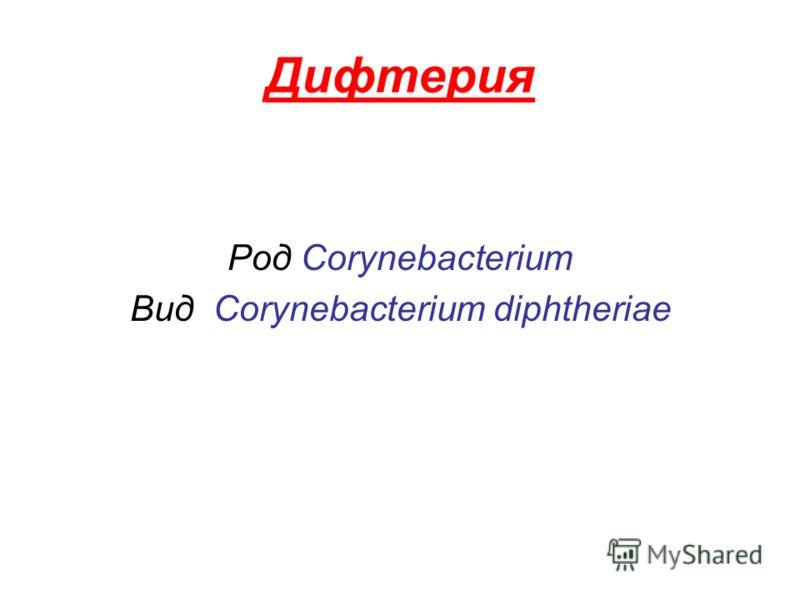 Дифтерия Род Corynebacterium Вид Corynebacterium diphtheriae