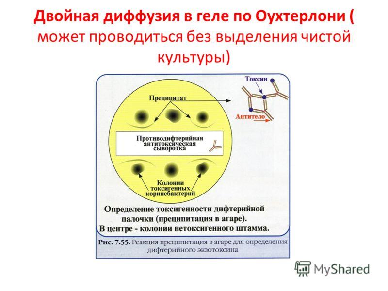 Двойная диффузия в геле по Оухтерлони ( может проводиться без выделения чистой культуры)