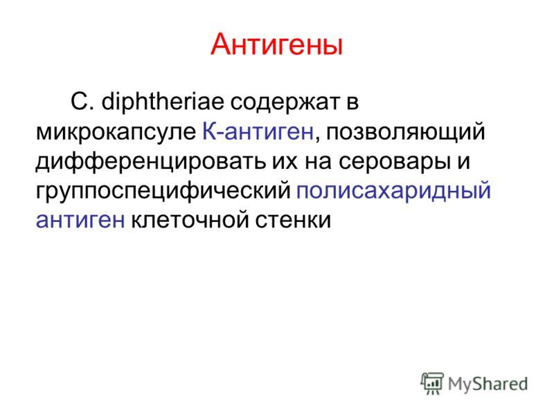 Антигены С. diphtheriae содержат в микрокапсуле К-антиген, позволяющий дифференцировать их на серовары и группоспецифический полисахаридный антиген клеточной стенки