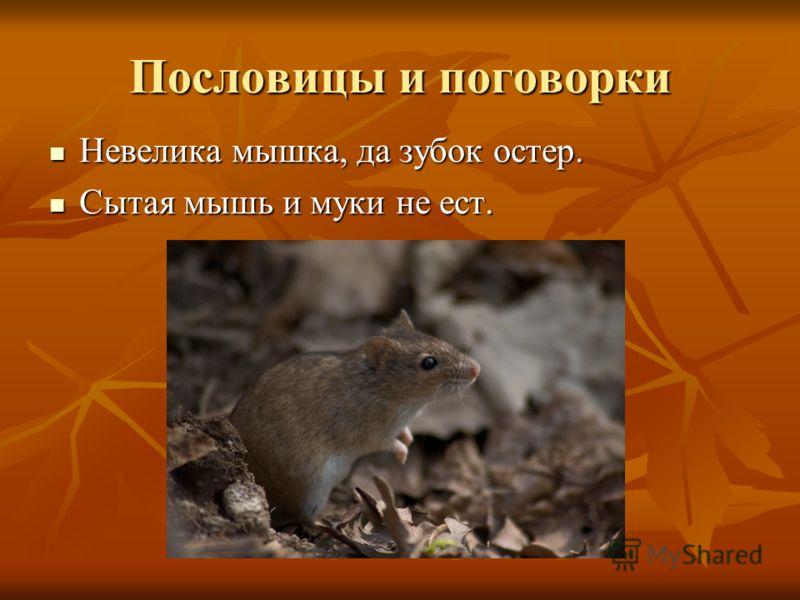 Пословицы и поговорки Невелика мышка, да зубок остер. Невелика мышка, да зубок остер. Сытая мышь и муки не ест. Сытая мышь и муки не ест.