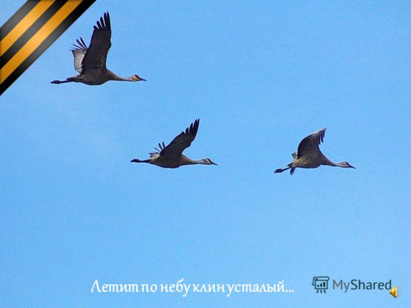 Летит по небу клин усталый…