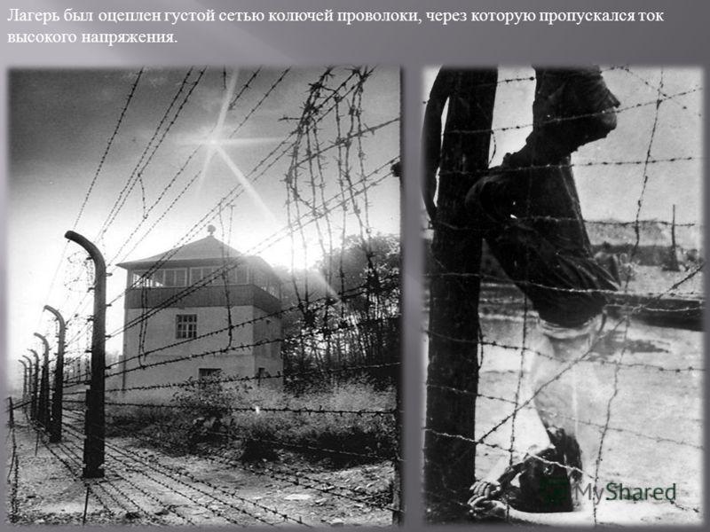 Лагерь был оцеплен густой сетью колючей проволоки, через которую пропускался ток высокого напряжения.