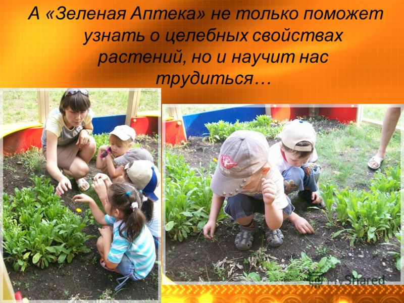 А «Зеленая Аптека» не только поможет узнать о целебных свойствах растений, но и научит нас трудиться…