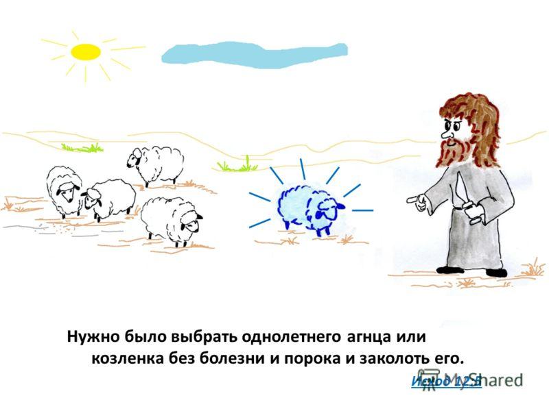 Нужно было выбрать однолетнего агнца или козленка без болезни и порока и заколоть его. Исход 12:5
