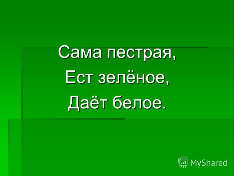 Сама пестрая, Ест зелёное, Даёт белое.