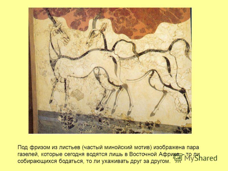 Под фризом из листьев (частый минойский мотив) изображена пара газелей, которые сегодня водятся лишь в Восточной Африке, - то ли собирающихся бодаться, то ли ухаживать друг за другом.
