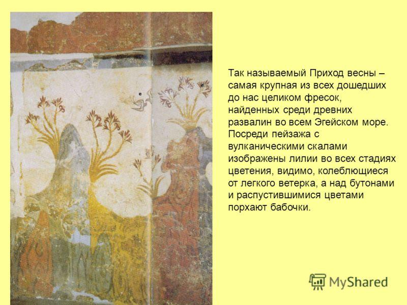 Так называемый Приход весны – самая крупная из всех дошедших до нас целиком фресок, найденных среди древних развалин во всем Эгейском море. Посреди пейзажа с вулканическими скалами изображены лилии во всех стадиях цветения, видимо, колеблющиеся от ле