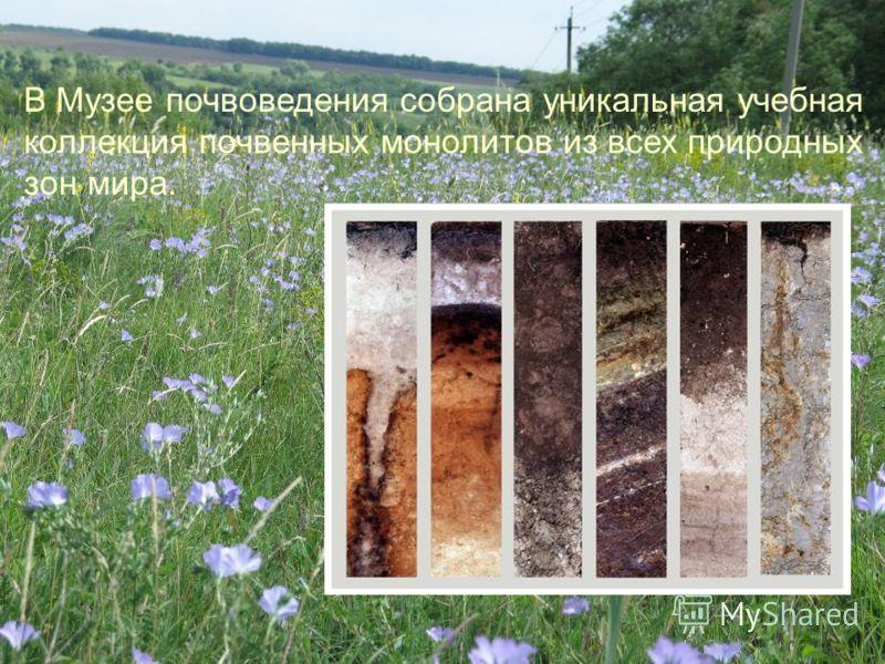 В Музее почвоведения собрана уникальная учебная коллекция почвенных монолитов из всех природных зон мира.