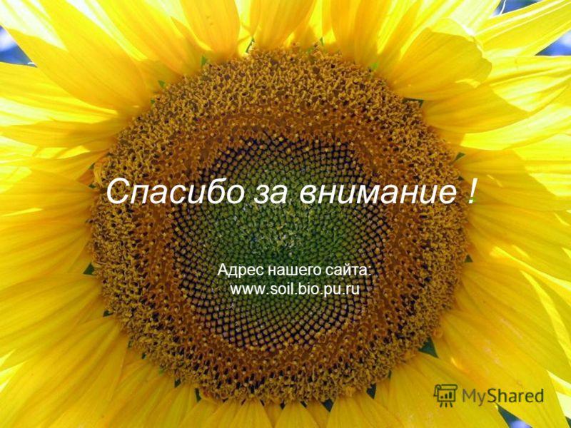 Спасибо за внимание ! Адрес нашего сайта: www.soil.bio.pu.ru