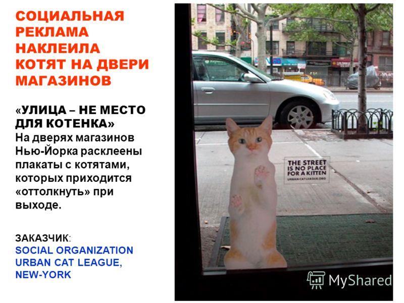 ЗАКАЗЧИК: SOCIAL ORGANIZATION URBAN CAT LEAGUE, NEW-YORK СОЦИАЛЬНАЯ РЕКЛАМА НАКЛЕИЛА КОТЯТ НА ДВЕРИ МАГАЗИНОВ « УЛИЦА – НЕ МЕСТО ДЛЯ КОТЕНКА» На дверях магазинов Нью-Йорка расклеены плакаты с котятами, которых приходится «оттолкнуть» при выходе.