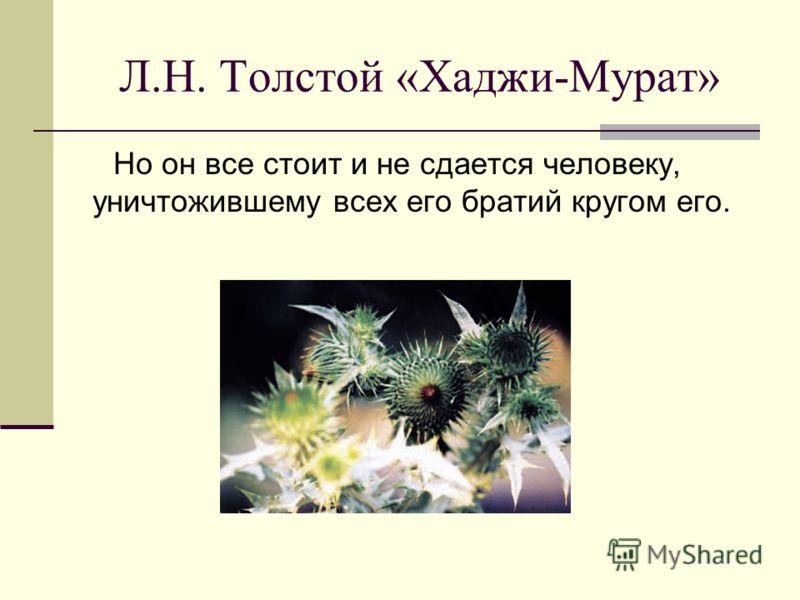 Л.Н. Толстой «Хаджи-Мурат» Но он все стоит и не сдается человеку, уничтожившему всех его братий кругом его.