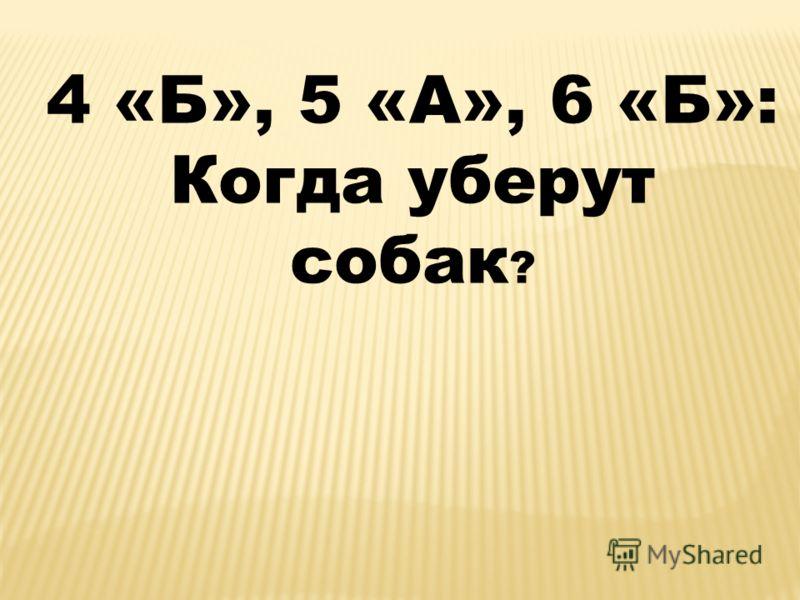 4 «Б», 5 «А», 6 «Б»: Когда уберут собак ?