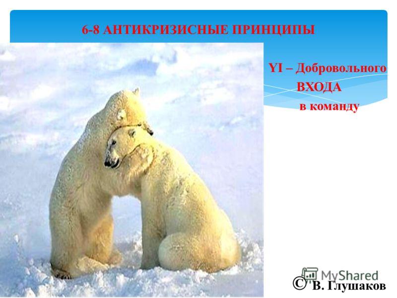 6-8 АНТИКРИЗИСНЫЕ ПРИНЦИПЫ YI – Добровольного ВХОДА в команду © В. Глушаков