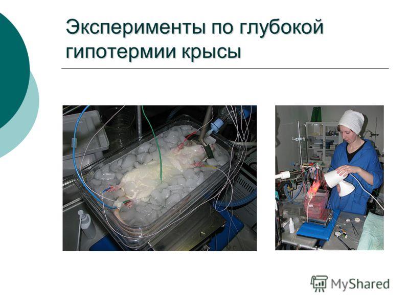 Эксперименты по глубокой гипотермии