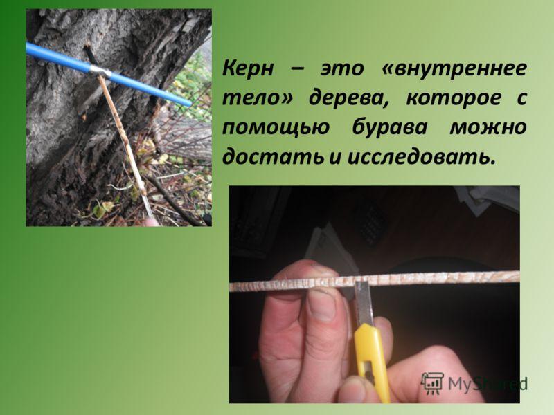 Керн – это «внутреннее тело» дерева, которое с помощью бурава можно достать и исследовать.