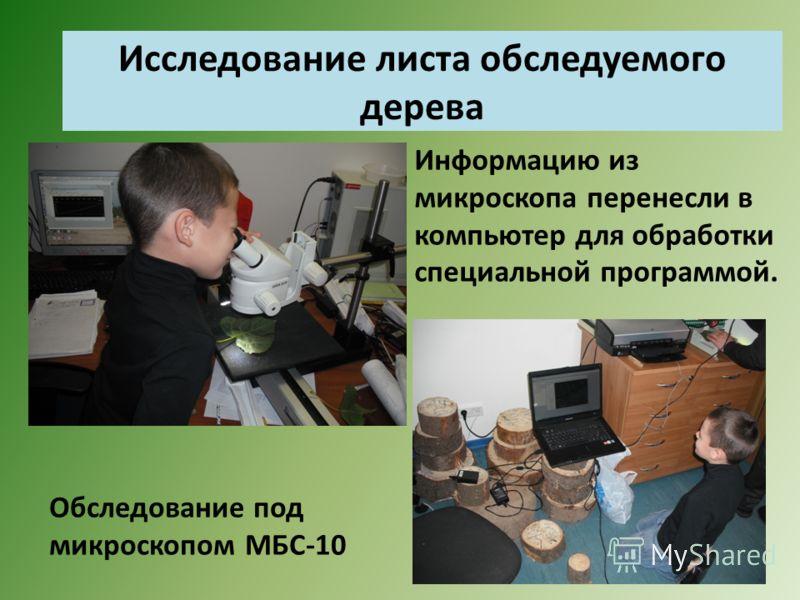 Исследование листа обследуемого дерева Информацию из микроскопа перенесли в компьютер для обработки специальной программой. Обследование под микроскопом МБС-10