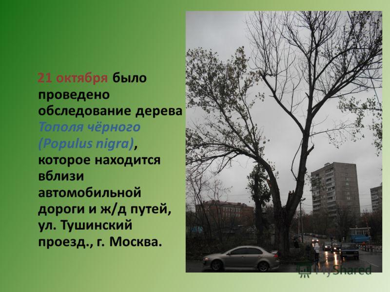 21 октября было проведено обследование дерева Тополя чёрного (Populus nigra), которое находится вблизи автомобильной дороги и ж/д путей, ул. Тушинский проезд., г. Москва.